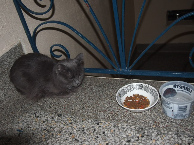 grey cat sleeps in hallway next to food and water dishes