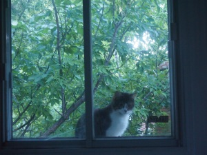 Brown tabby cat looks into kitchen window